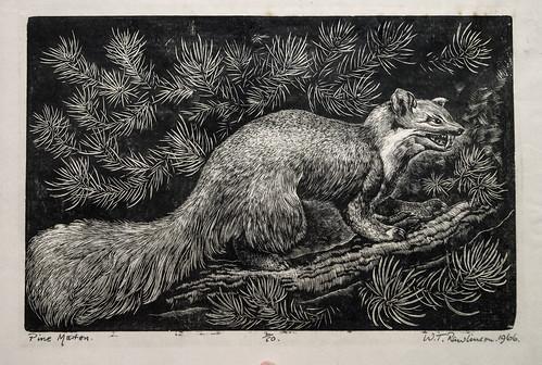 William Thomas Rawlins - Pine Marten - Wood Engraving | by Thomas Shahan 3