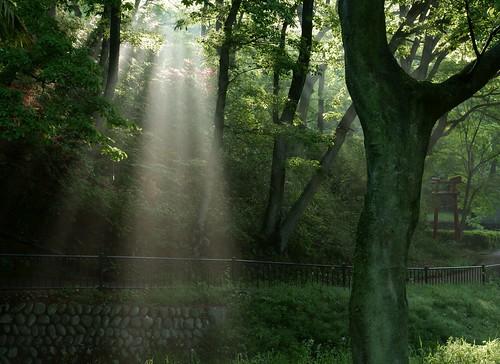 japan saitama yoshimi 埼玉県 japanesenature 日本の自然 吉見町 埼玉県の景色 八丁公園 hacchopark