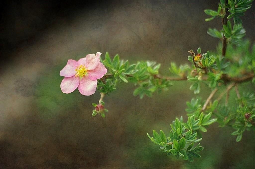 A fragile flower