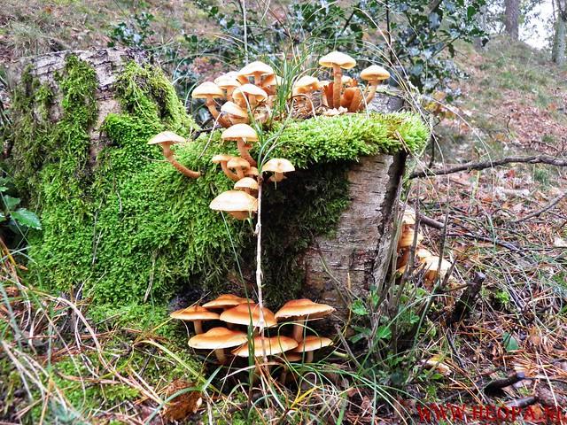 20-10-2012     Wedeblick-   Driebergen        25 Km (74)