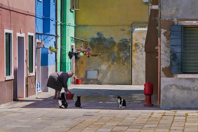 catlick / Katzenwäsche