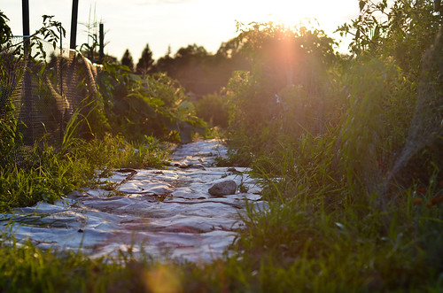 sunset plants sunlight green vegetables garden botanical michigan magic arbor hour ann matthaei