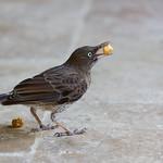 Brown bird and carmel popcorn