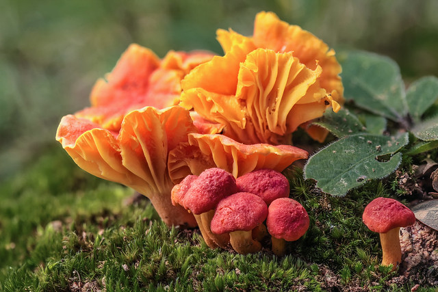Forest food