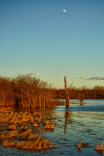 park blue winter brown moon lake grass reflections flooding louisiana wind bluesky deadtree shreveport bichamdicksonpark sonya7ii