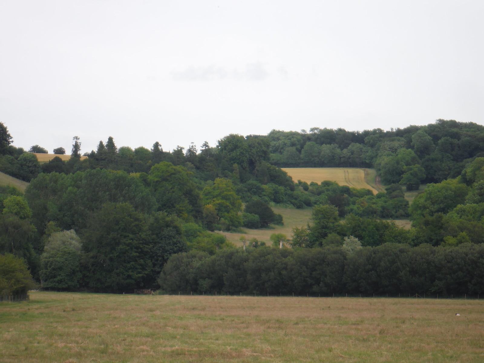 Michelmersh Wood, from Test Meadows SWC Walk 265 - Dean to Mottisfont and Dunbridge