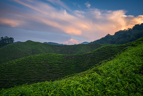 sunset verde green nature beautiful clouds cloudy tea malaysia plantation cameronhighlands ceai plantatie