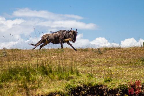 Run free!   by DragonSpeed