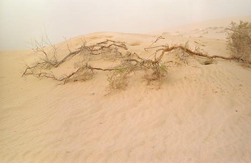 Desert Scrub | by Doha Sam