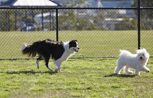Dog off-leash areas (dog parks) | Brisbane City Council