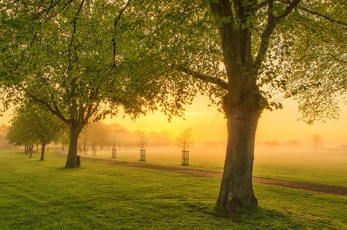 morning trees light mist fog sunrise landscape dawn golden nikon day silence warwickshire bidfordonavon d7000 jactoll nikcolorefexpro4