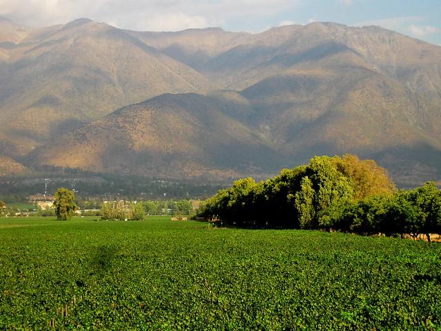 Viñas de Peñalolén (2012 Mayo)