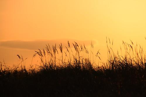 autumn sunset wild nature field river herbs romania ear olt judetulolt marinela2008 valeafetii