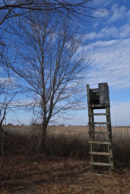 Deer Stand at Fort DuPont State Park