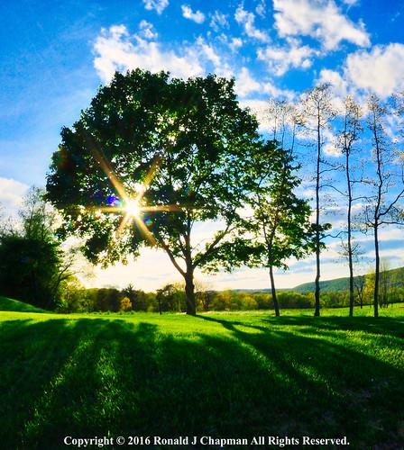 sunset sky usa sun tree nature clouds landscape spring nikon sundown pennsylvania bluesky fisheye ron hdr springtime chapman ronchap ronaldjchapman