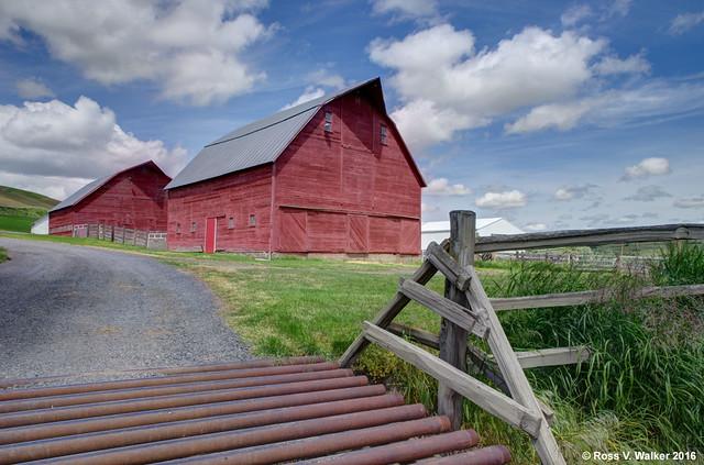 Two Palouse Barns