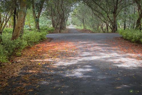 road flower green sunshine carpet woods scenic dahanu flowermat bsescolony