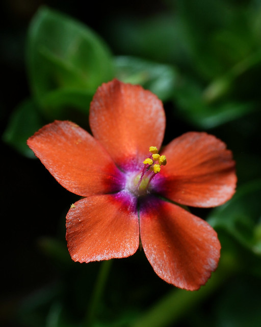 Garden Flower 3 20120502