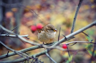 little bird | by blueandyou.photography