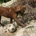 Dog and soccer ball