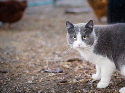 Farm Cat | by MarLeah Joy