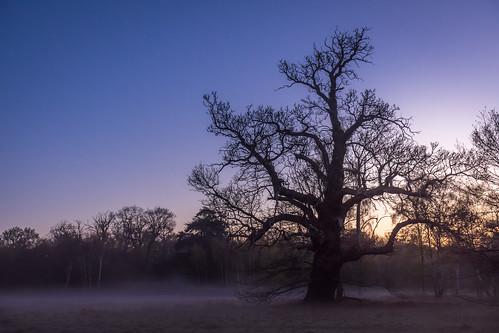 park morning blue england sky sun mist tree yellow fog forest sunrise oak unitedkingdom shade gb windsor