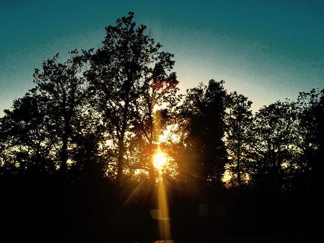 Tramonto nel bosco - Sunset in the woods