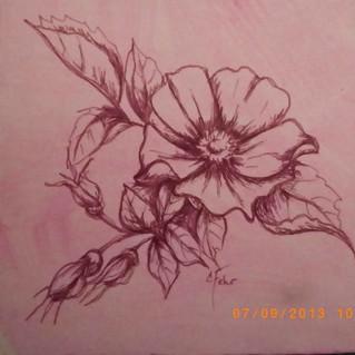 alberta rose art 5