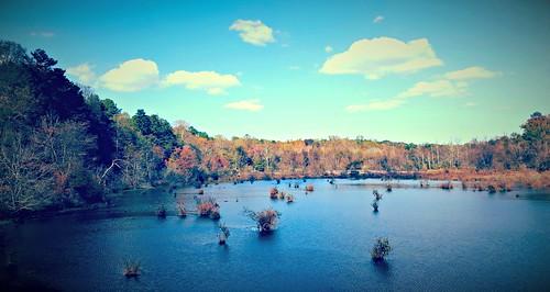creek georgia fishing lagoon marsh suwanee greenway georgepiercepark ivycreekgreenway suwaneecreekgreenway