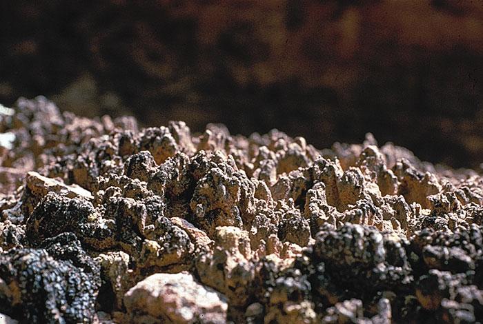Biocrusts: small organisms, big impacts