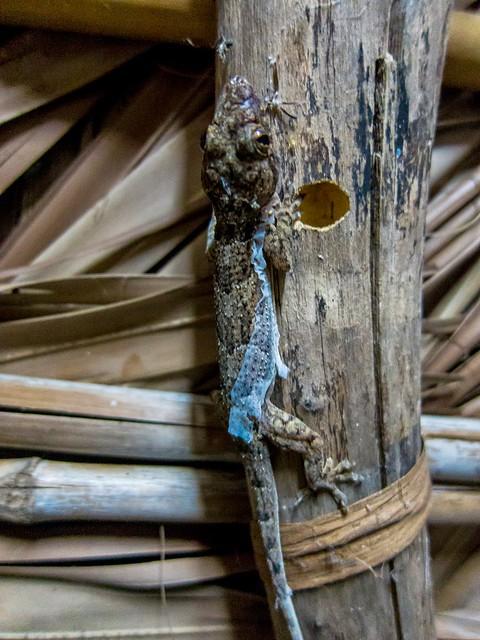 Madagascar8 - 031.jpg