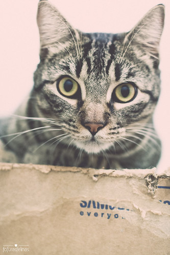 Cat and box | by fofurasfelinas