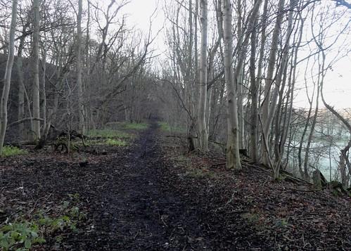 Otley Branch Line, Milner Wood, Burley-in-Wharfedale - Looking West | by sgwarnog2010