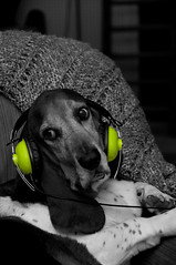 headphonebasset
