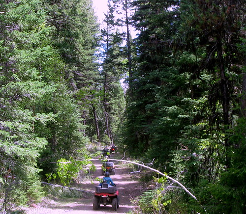 atv forest green laclahache path trail trees tree road