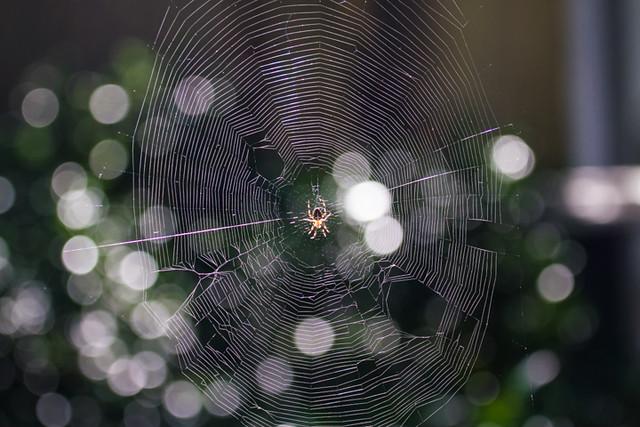 spider_backyard_330_8-24-13_resized
