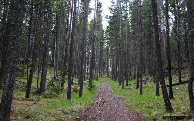 Trail Trial (2013)