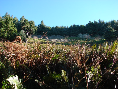 Meadow along the North Neahkahnie Mountain Trail