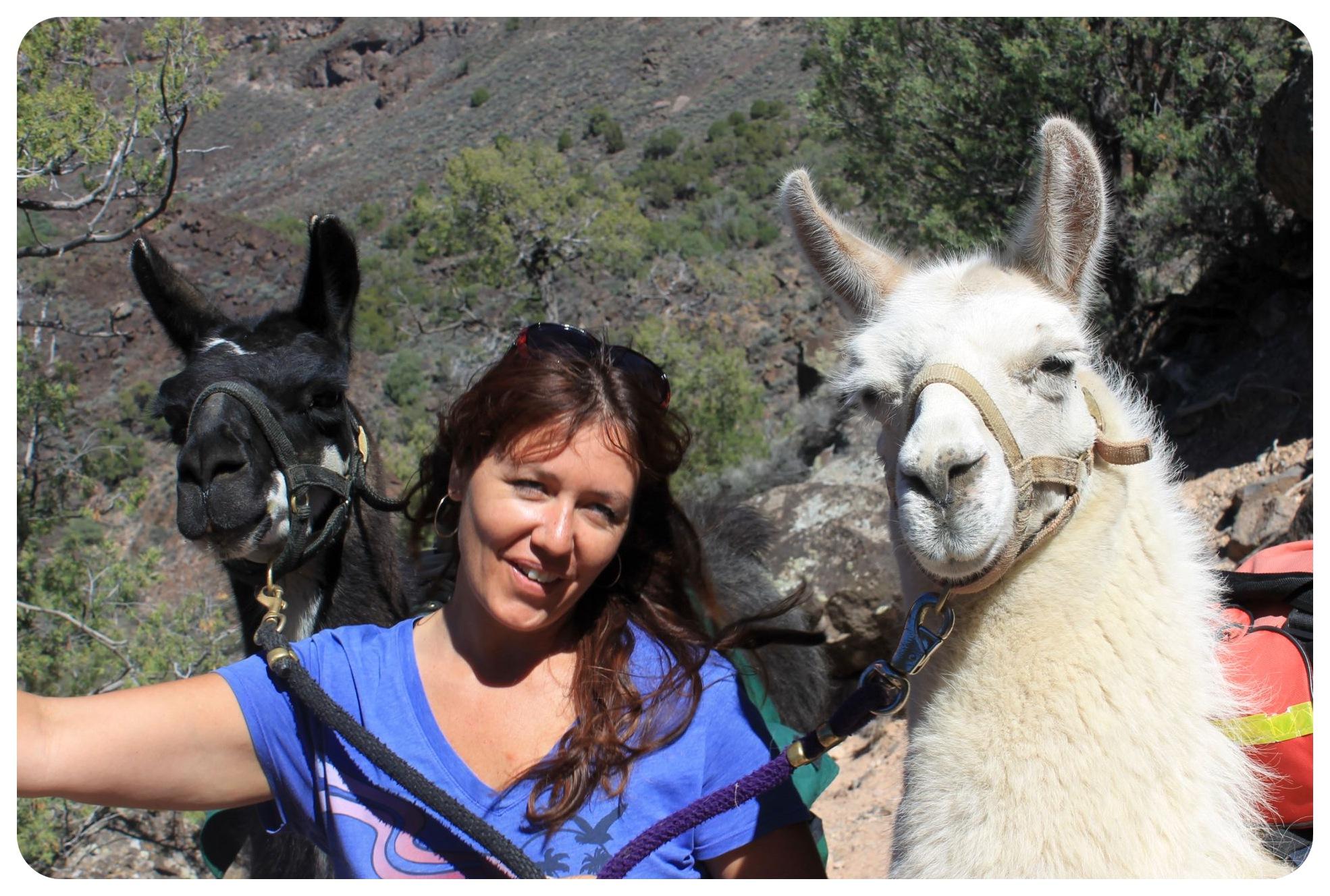 llama trekking new mexico