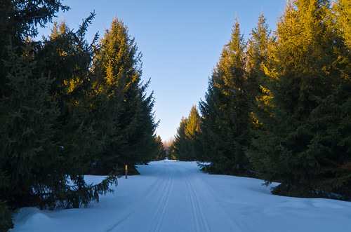 trees winter snow ski cold landscape evening woods path walk trail