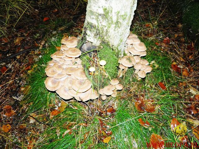 20-10-2012     Wedeblick-   Driebergen        25 Km (11)