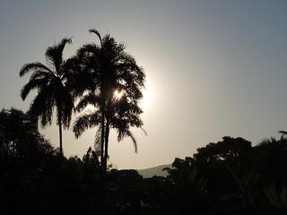 Palms nas Sunset.