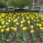 Park Avenue Flowers