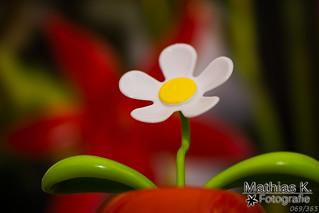 Blume | Projekt 365 | Tag 69