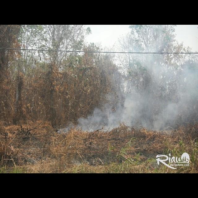 Hutan Yg Dibakar Terbakar Di Dayun Kabupaten Siak Sri Indr Flickr