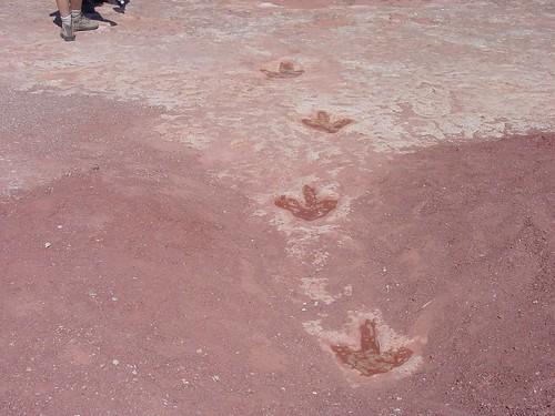 Dinosaur Tracks | by U.S. Geological Survey