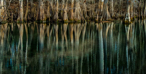 reflection forest unitedstates florida fav20 cypress knees fav30 chiefland fav10 cypressswamp tannin cypressknees manateesprings manateespringsstatepark floridastateparks