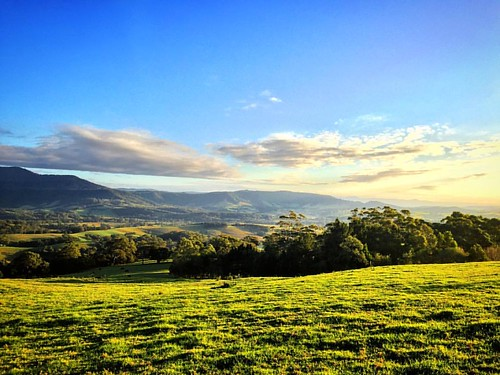 #Australia #visitnsw #jamberoo #green #meadows #landscape #picoftheday