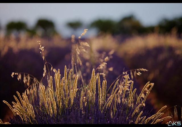 Provençal Scents
