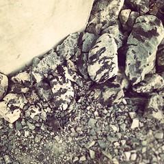 zebra rocks #geilo #norway